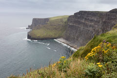 The cliffs of Moher Stock Image