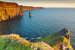 Cliffs of Moher at sunset Stock Photography