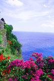 Cliffs near Uluwatu Temple on Bali, Indonesia. Beautiful blossom Uluwatu Temple on Bali, Indonesia. The cliffs and the sea near the Uluwatu Temple on Bali Stock Images
