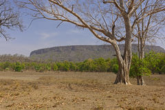 Cliffs of the Old Fort. In Banhavgarh National Park in India Stock Image