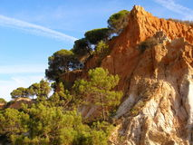 Cliffs and pines 2 Stock Image