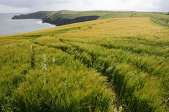 Cliffs and plantations, cork county, ireland. This is view from the top of cliffs, great sunny weather Stock Photo