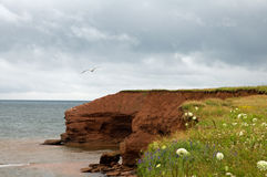 Cliffs in prince edward island. The red rock is a symbol of Prince Edward Island Stock Photography