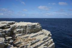 Cliffs of Sealion Island - Falkland Islands. Colony of Imperial Shag [Phalacrocorax atriceps albiventer] on the cliffs of Sealion Island in the Falkland Islands Royalty Free Stock Photos