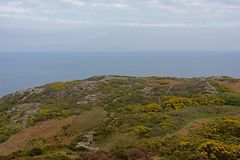 Cliffs with shrubs along the north sea coast of howth , ireland. Rocky cliffs along the north sea coast of howth, ireland with flowering gorse  bushes on a stock photography