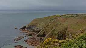 Cliffs with shrubs along the north sea coast of howth , ireland. Rocky cliffs along the north sea coast of howth, ireland with flowering gorse  bushes on a stock image