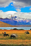 The cliffs Torres del Paine Stock Images