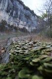 Cliffs and tree by Buffalo River, Arkansas stock photo