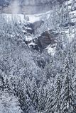 Cliffs and trees under the snow. In a winter landscape of a forest in French Alps Royalty Free Stock Images