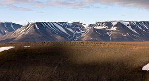 Cliffs in Tundra Landscape in Svalbard Royalty Free Stock Images