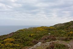 Cliffs with vegetation along the north sea coast of howth , ireland. Rocky cliffs along the north sea coast of howth, ireland with flowering gorse and other stock image