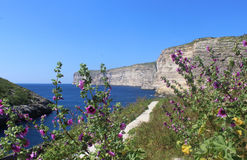 Cliffs of Xlendi, Gozo, Republic of Malta. With flowers in the foreground Stock Photo