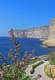 Cliffs of Xlendi, Gozo, Republic of Malta, vertical sight. Cliffs of Xlendi, Gozo, Republic of Malta,vertical sight, pink flowers in foreground Royalty Free Stock Photo
