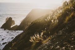 Cliffside and ocean with plants glowing royalty free stock photography