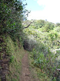 Cliffside path on Tantalus Mountain Stock Photography