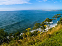Cliffside View of Ocean. A view of the ocean from a cliff with trees and plants growing on the cliffside Royalty Free Stock Photo