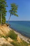 Clifftop с лесом и наклоненным деревом над пляжем стоковое изображение