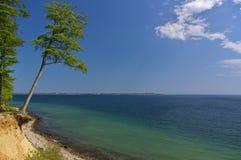 Clifftop с лесом и наклоненным деревом над пляжем стоковые изображения