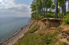 Clifftop with forest above the beach Stock Photography