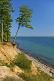 Clifftop with forest and slanted tree above the beach Stock Image