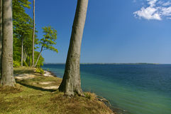 Clifftop with forest and slanted tree above the beach Stock Photo