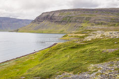 Clifs and Dynjandisvogur fjord - Iceland. Stock Photography