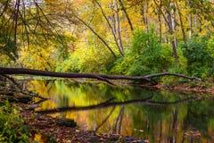 Clifton Gorge en automne Photographie stock libre de droits