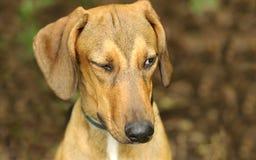 Cligner de l'oeil drôle de chien photos stock