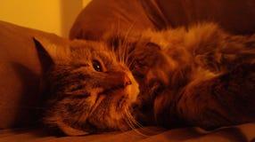 Cligner de l'oeil le chat Images libres de droits