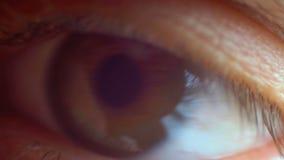 Clignotement masculin en gros plan extrême d'oeil humain clips vidéos