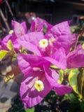 clima tropical de la flor foto de archivo
