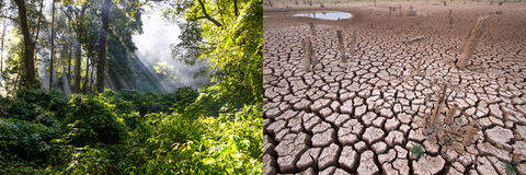 Climate change, Compare image. Between very Abundance green forest and very arid land royalty free stock photos