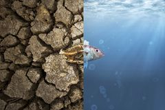 Climate Change and Global warming. Concept. Fish bone on cracked earth and Fish in ocean metaphor climate change impact to Aquatic Animals Royalty Free Stock Images