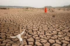 Climate change made  drought land Stock Photos