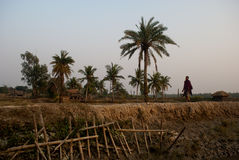 Climate Change in Sundarban, India Stock Photos