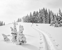 Climb in fresh snow Stock Photography