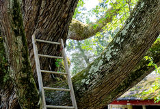 The climb up to my favorite tree Royalty Free Stock Photo