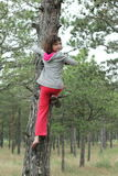 Climb up the tree Royalty Free Stock Photos