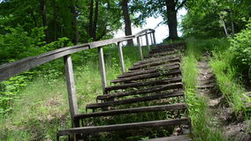 Climb upstair wooden old stairs railing surround green flora stock video