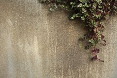 Climber on cement Royalty Free Stock Images