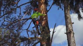 Climber climbs a tree
