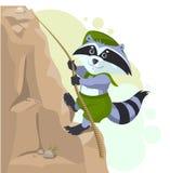 Climber descending rope. Scout raccoon climbs rock. Cartoon illustration in vector format vector illustration