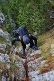 Climber on mountain Royalty Free Stock Photos