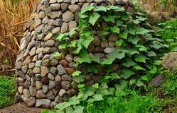 Climber plant on stone coated manhole Royalty Free Stock Image