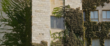 Climber Plants. House in Jerusalem, Israel covered with climber plants Stock Photo