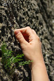 Climber's hand gripping a hole in the rock. A girl's hand trying to achieve a good grip on a sandstone rock while freeclimbing Stock Images