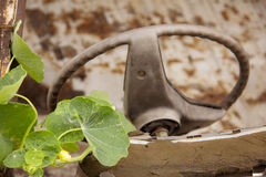Climber tree on the old steering wheel of a rusting car in a far Royalty Free Stock Photography