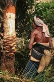 Climber tree stock photography