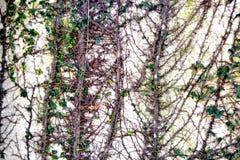 climbers Fotografia Stock Libera da Diritti
