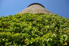 Climbers plant on the medieval tower in the courtyard of the Mar. Ienberg castle with blue sky close up stock images